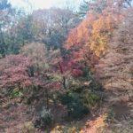 等々力渓谷で紅葉狩りかねた散策